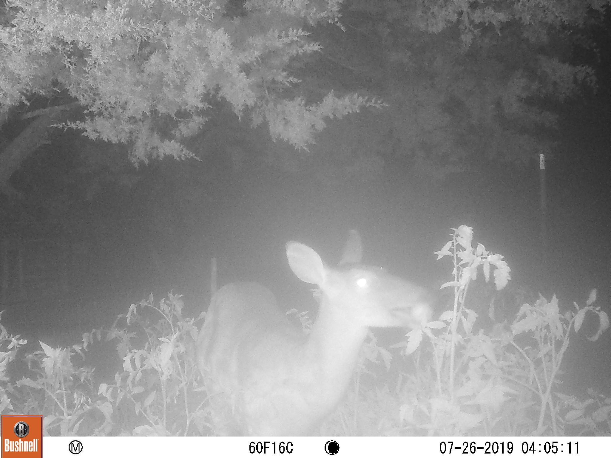 f*^#ing deer-07260022.jpg