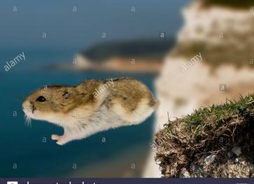 Name:  1 lemming.png Views: 30 Size:  180.1 KB