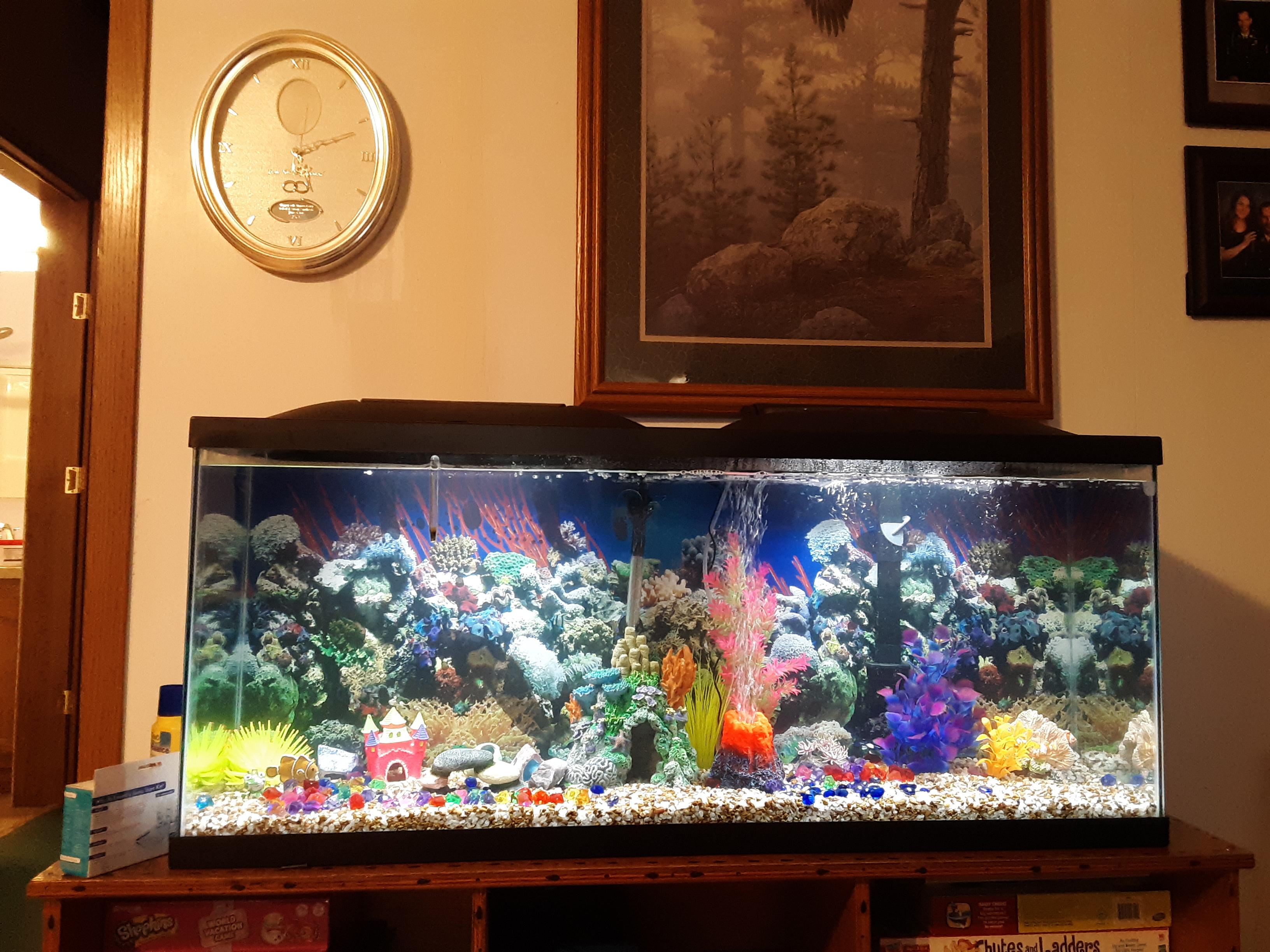 Hobby Fish tanks-20200125_171011-1-.jpg
