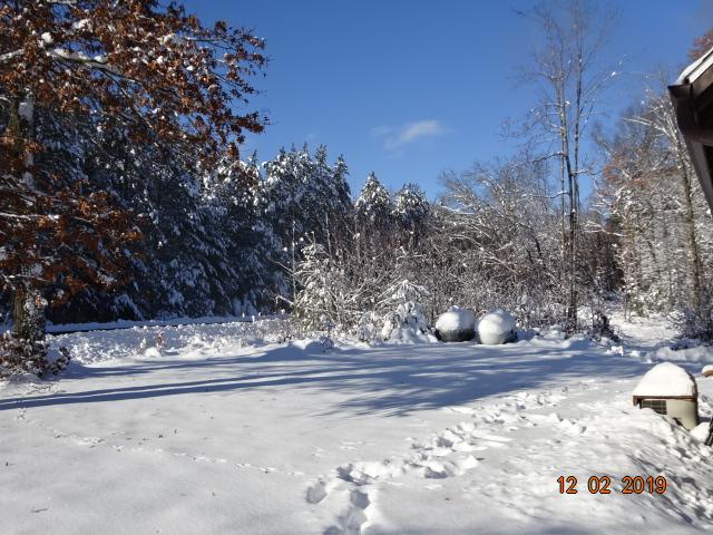 Snow Storm-dsc02566.jpg