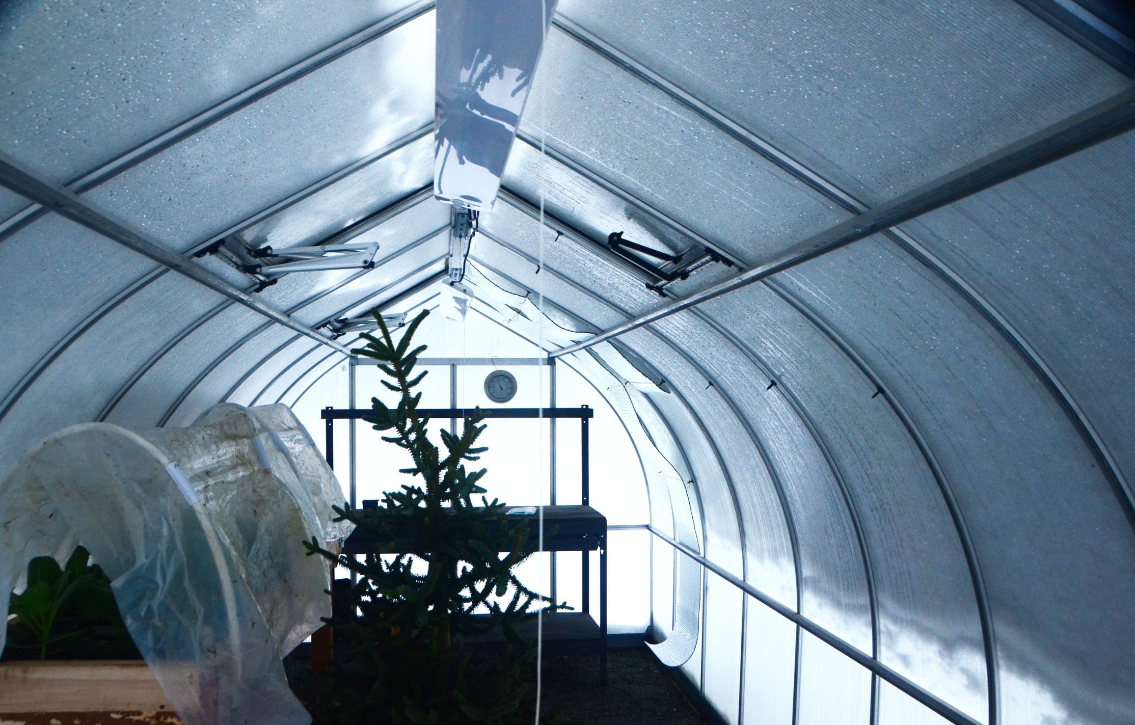 The Ultimate Prepper Greenhouse-dsc_5298.jpg