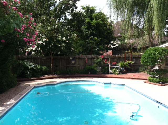 Converting Your Lawn to More Practical Uses...-img_0321.jpg
