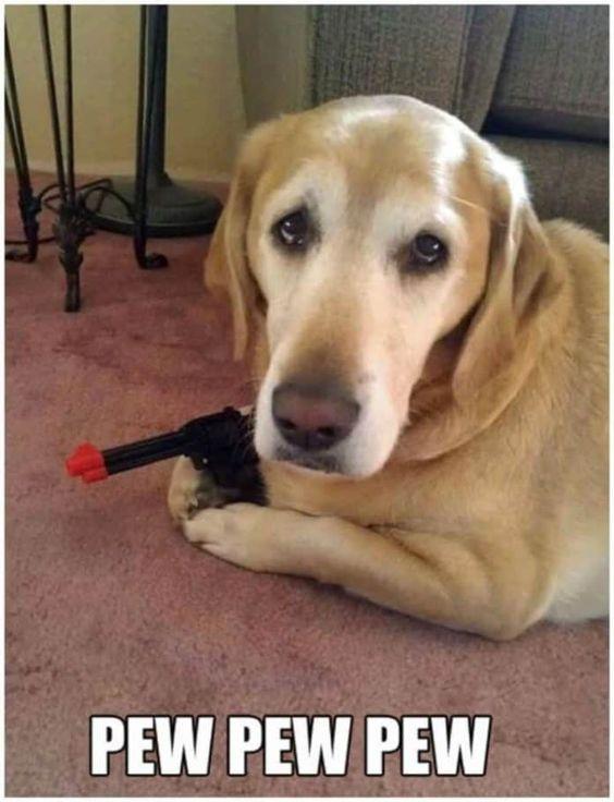 The Firearm & 2A Meme Thread-pew-dog.jpg
