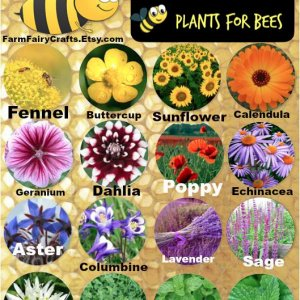 Save the bees by planting flowers they love<3